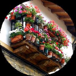 Piante e fiori ornamentali
